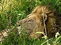 Ngorongoro Crater (49) (13962051168).jpg