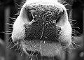 Nose (40085179550).jpg