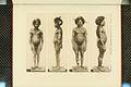 Nova Guinea - Vol 3 - Plate 33.jpg