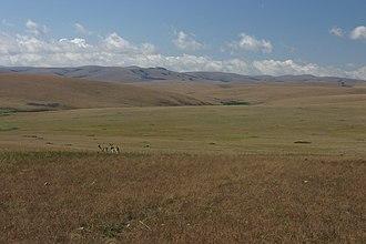Nyika National Park - Afromontane grassland of the Nyika Plateau