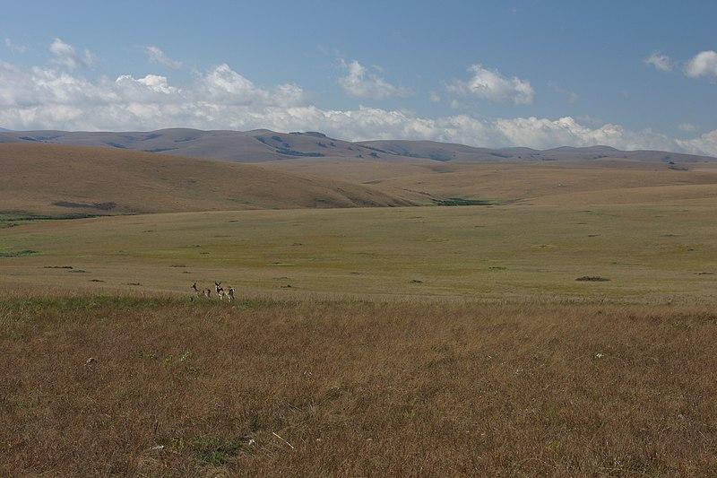 File:Nyika grassland.jpg