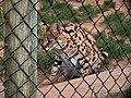 Oaklawn Farm Zoo, May 16 2009 (3538927011).jpg