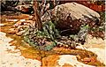 Oasis Spring, Zion National Park 4-14 (24376420110).jpg