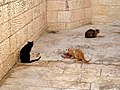 Old Jerusalem Ha-Bikurim road cats.jpg