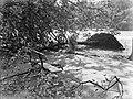 Omgewaaide boom, Bestanddeelnr 189-0895.jpg