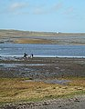 On the Shore - geograph.org.uk - 353146.jpg