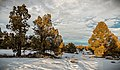 Oregon Badlands Wilderness (32522046242).jpg