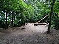 Overchurch Woods, Wirral.jpg