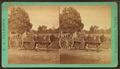 Ox cart, by J. A. Palmer.png