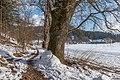 Pörtschach Winklern Quellweg Wanderweg Eichen am Waldrand 14012021 0369.jpg