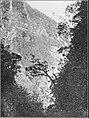 PSM V86 D116 A Tahitian Valley.jpg