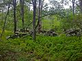 Pachaug-Nehantic Crossover - stone wall ruins, Voluntown, CT.jpg