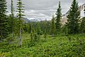 Paget Lookout Hike.jpg