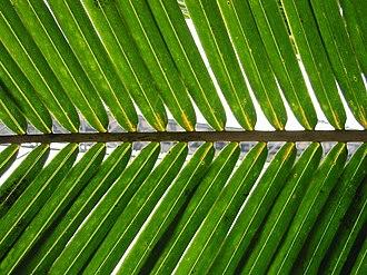 Kingdom of Nri - A tender palm frond was a symbol of Nri