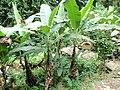 Palmiers Togo.jpg