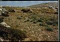 Panorama shilo 11.jpg