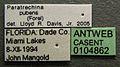 Paratrechina pubens casent0104862 label 1.jpg