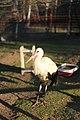 """Parcul de Animale - """"Moara de Vant"""" (8110164656).jpg"""