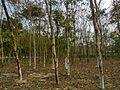 Park vegetation.jpg
