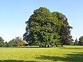 Parkland, Chilton Foliat - geograph.org.uk - 987794.jpg