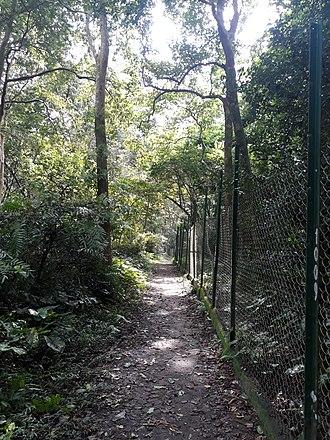 Bibhutibhushan Wildlife Sanctuary - Inside of the Parmadan forest