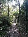 Parmadan Forest 16.jpg