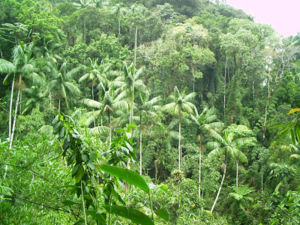 Tropical vegetation - Dense rainforest vegetation in the Itatiaia National Park in Brazil.