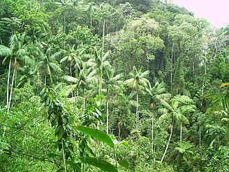 Tropical vegetation - Dense rainforest vegetation in the Itatiaia National Park in Brazil.
