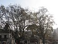 Pashupatinath Temple IMG 1496 13.jpg