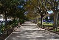 Passeig de l'avinguda de Blasco Ibáñez de València.JPG