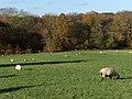 Pasture, Lower Old Park - geograph.org.uk - 282205.jpg
