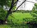 Pasture near Bantry - geograph.org.uk - 14825.jpg