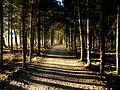 Path - Flickr - Stiller Beobachter (2).jpg