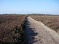 Path across Dibden Bottom - geograph.org.uk - 1286593.jpg