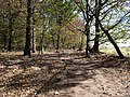 Path in the Hambach forest 04.jpg
