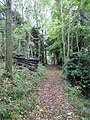 Path through the woods - geograph.org.uk - 1567248.jpg