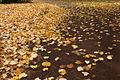 Paved with gold at the RBGE - geograph.org.uk - 1559271.jpg
