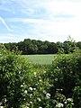 Pebsham Wood - geograph.org.uk - 1358858.jpg