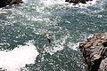 Pelicano sobrevoando o Pacífico.jpg