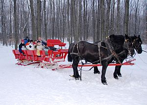 Percherons. New family tradition - taking a sl...