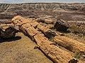 Petrified Forest National Park 4.jpg