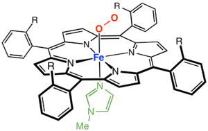 Myoglobin - A picket-fence porphyrin complex of Fe, with axial coordination sites occupied by methylimidazole (green) and dioxygen.  The R groups flank the O2-binding site.