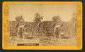 Picking cotton, from Robert N. Dennis collection of stereoscopic views 7.png