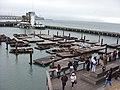 Pier 39 Seals - Focas - panoramio (2).jpg