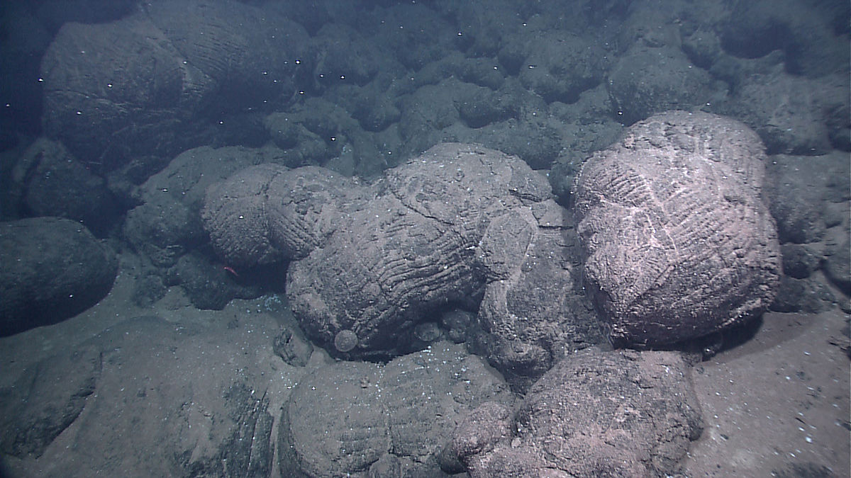 File:Pillow Lava at Galapagos Rift 01 jpg - Wikimedia Commons