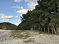 Pine grove and Fukae Beach.jpg