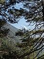 Pine tree nepal.jpg