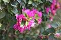 Pink Flower (204966091).jpeg
