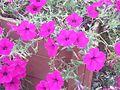 Pink Flower 0.jpg