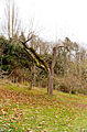 Piper Orchard tree 2.jpg